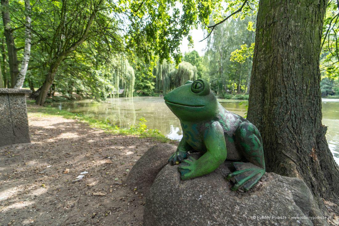 żaby wparku toco zobaczyć Kalisz